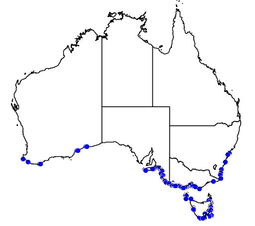 distribution map showing range of Eudyptes pachyrhynchus in Australia