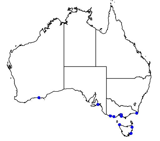 distribution map showing range of Eudyptes sclateri in Australia