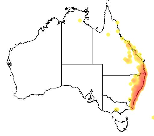 distribution map showing range of Ficus coronata in Australia