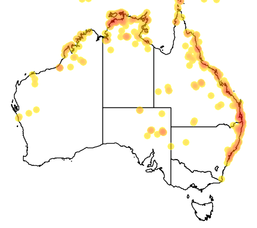 distribution map showing range of Fimbristylis ferruginea in Australia