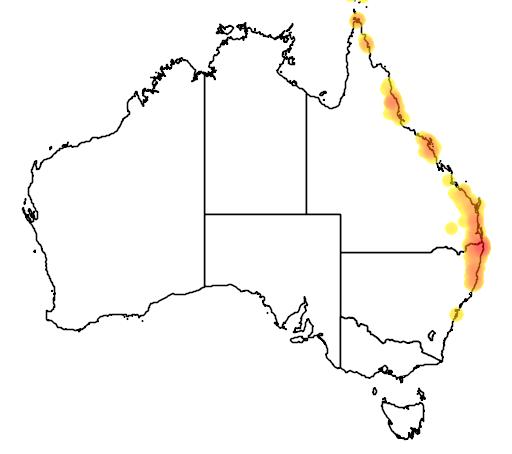 distribution map showing range of Flindersia schottiana in Australia