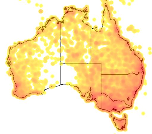 distribution map showing range of Gallicrex cinerea in Australia