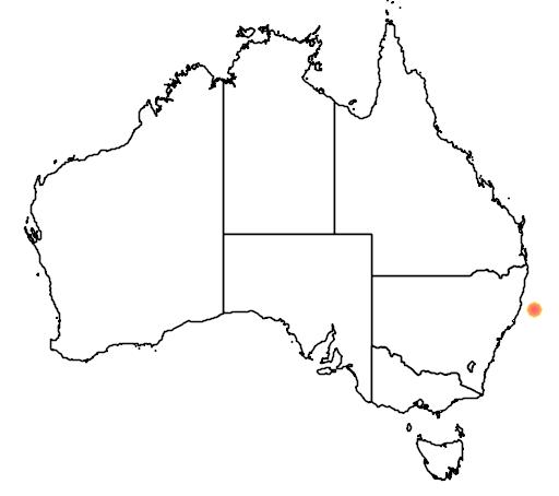 distribution map showing range of Gallirallus sylvestris in Australia