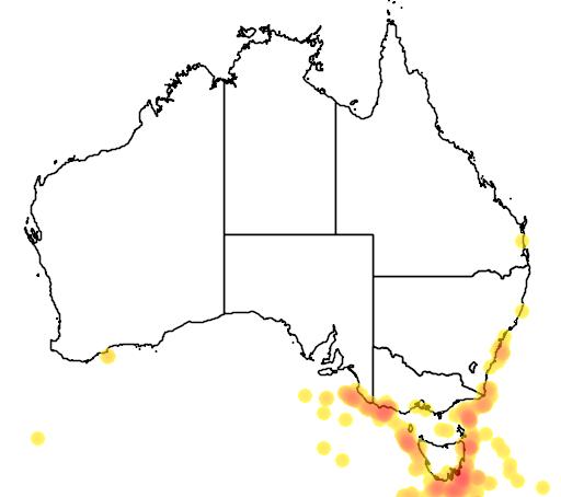 distribution map showing range of Garrodia nereis in Australia