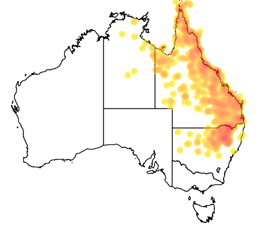 distribution map showing range of Gehyra dubia in Australia