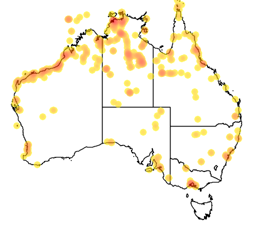 distribution map showing range of Glareola maldivarum in Australia