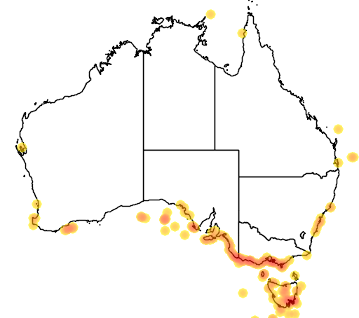 distribution map showing range of Globicephala melas in Australia