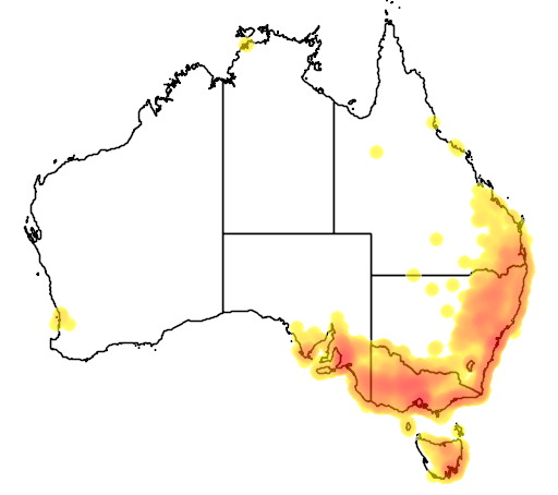 distribution map showing range of Glossopsitta concinna in Australia