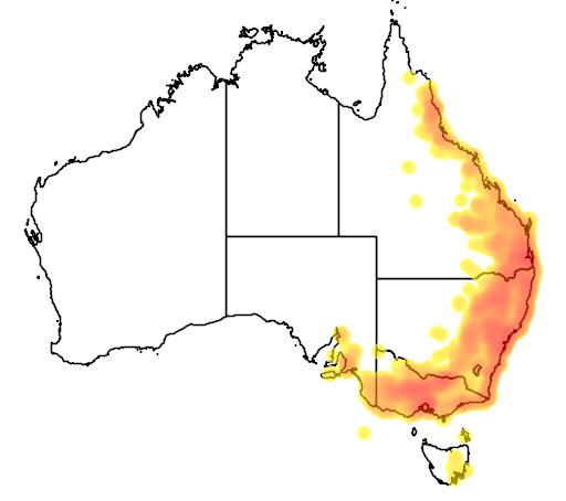 distribution map showing range of Glossopsitta pusilla in Australia