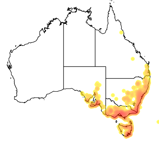 distribution map showing range of Goodenia ovata in Australia