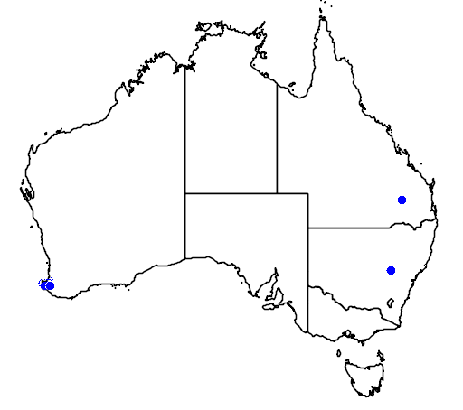 distribution map showing range of Grevillea bronwenae in Australia