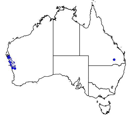 distribution map showing range of Grevillea candelabroides in Australia