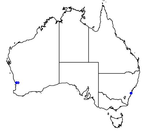 distribution map showing range of Grevillea corrugata in Australia