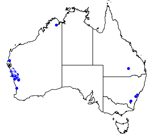 distribution map showing range of Grevillea dielsiana in Australia