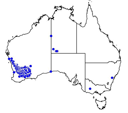 distribution map showing range of Grevillea excelsior in Australia