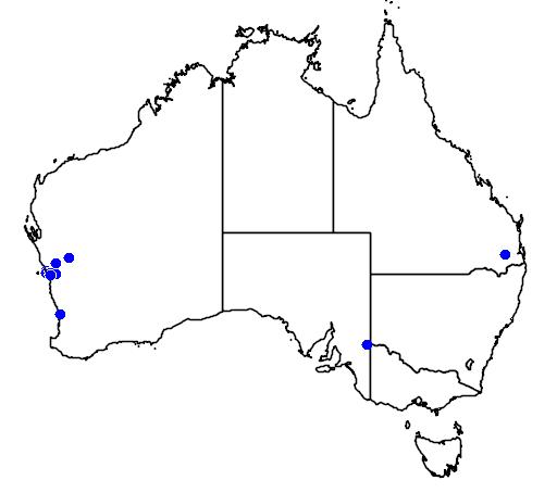 distribution map showing range of Grevillea fililoba in Australia