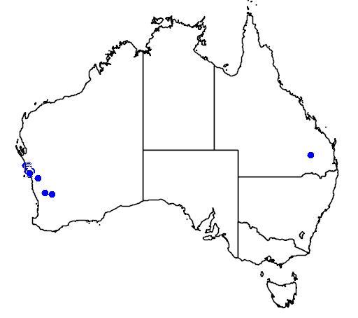distribution map showing range of Grevillea intricata in Australia