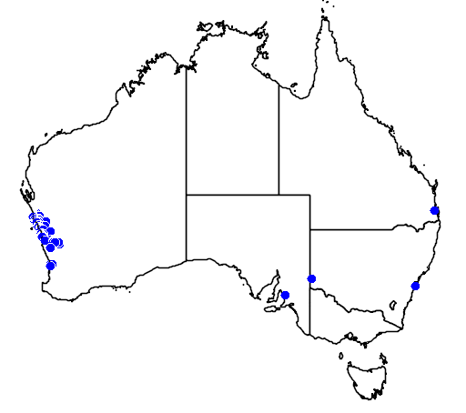 distribution map showing range of Grevillea leucopteris in Australia