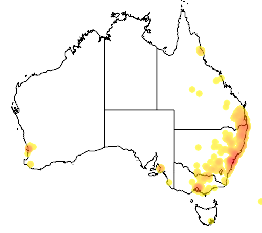 distribution map showing range of Grevillea robusta in Australia