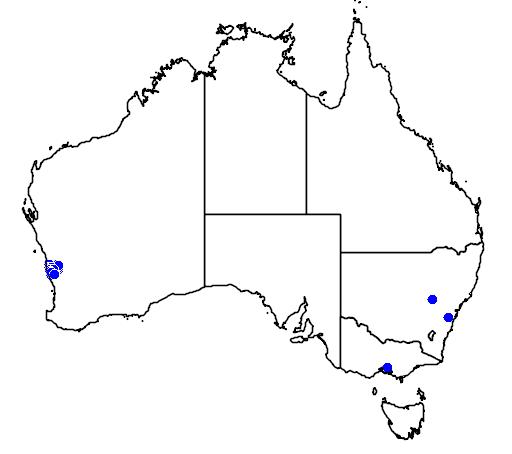 distribution map showing range of Grevillea thyrsoides in Australia