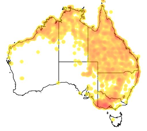 distribution map showing range of Grus rubicunda in Australia