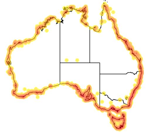 distribution map showing range of Haematopus fuliginosus in Australia