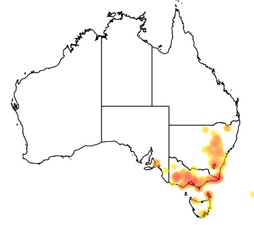 distribution map showing range of Hakea decurrens in Australia