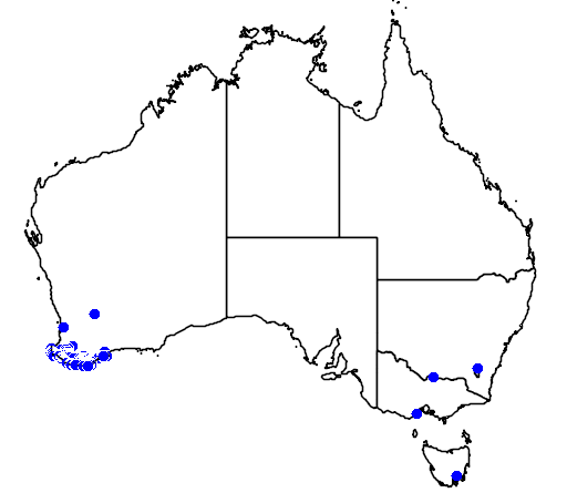 distribution map showing range of Hakea oleifolia in Australia