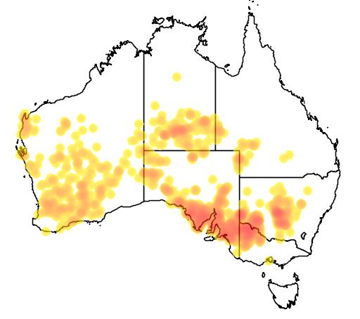 distribution map showing range of Halgania cyanea in Australia