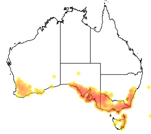 distribution map showing range of Helichrysum leucopsideum in Australia