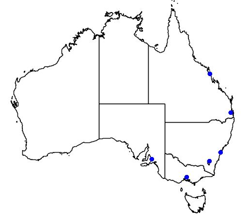 distribution map showing range of Hibiscus insularis in Australia