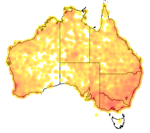 distribution map showing range of Hieraaetus morphnoides in Australia