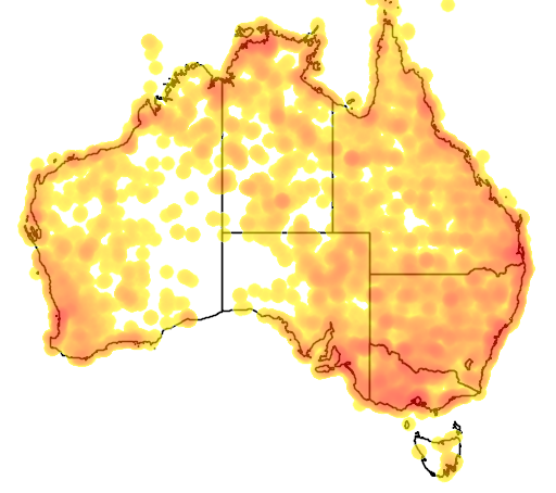 distribution map showing range of Himantopus himantopus in Australia