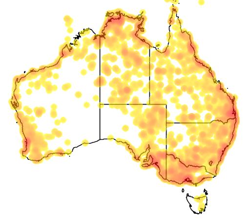 distribution map showing range of Himantopus leucocephalus in Australia