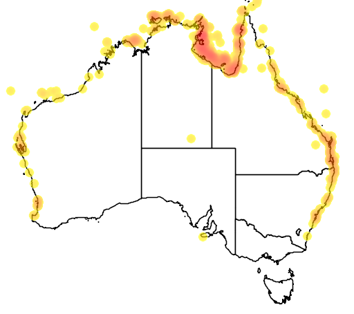distribution map showing range of Hydrophis elegans in Australia