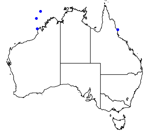 distribution map showing range of Hydrophis melanocephalus in Australia