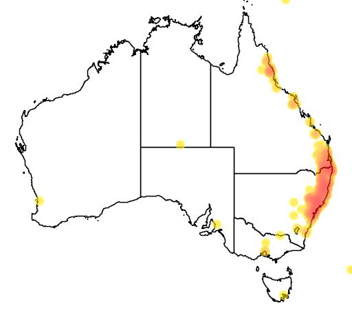 distribution map showing range of Hymenosporum flavum in Australia