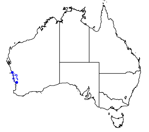 distribution map showing range of Hypocalymma xanthopetalum in Australia