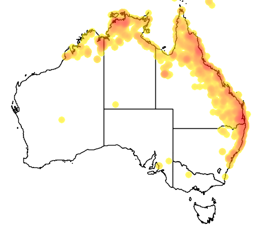 distribution map showing range of Irediparra gallinacea in Australia