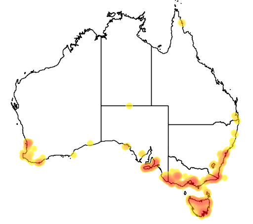distribution map showing range of Isoodon obesulus in Australia