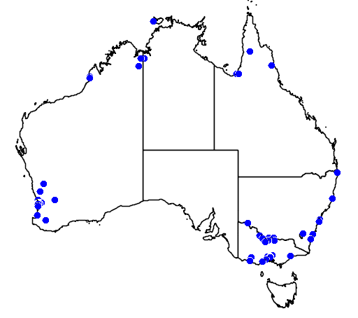 distribution map showing range of Ixobrychus minutus in Australia