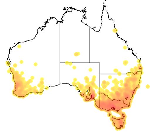distribution map showing range of Juncus bufonius in Australia