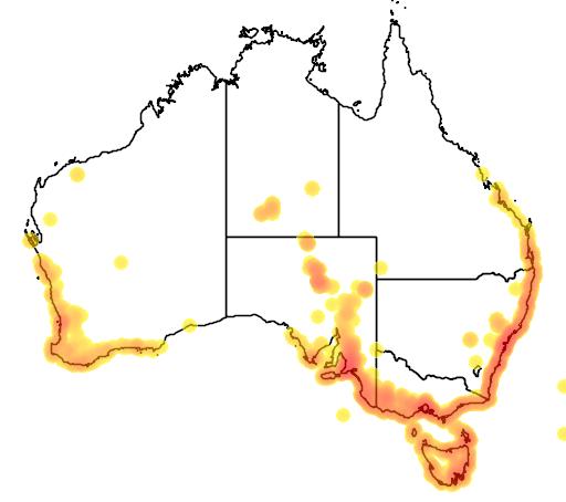 distribution map showing range of Juncus kraussii in Australia