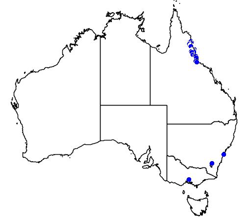 distribution map showing range of Laccospadix australasica in Australia