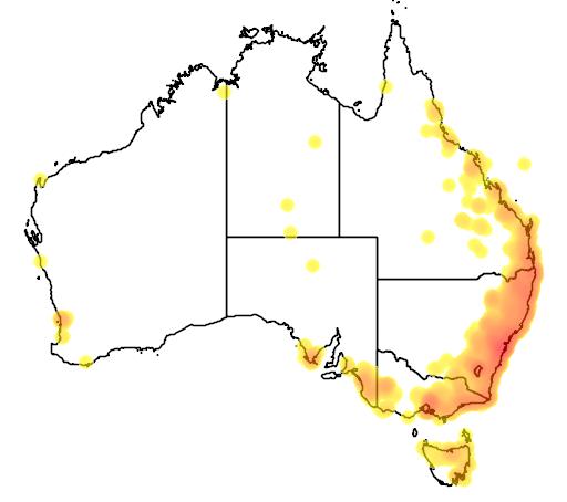 distribution map showing range of Lampropholis delicata in Australia