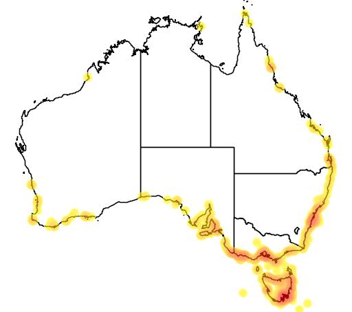 distribution map showing range of Larus dominicanus in Australia