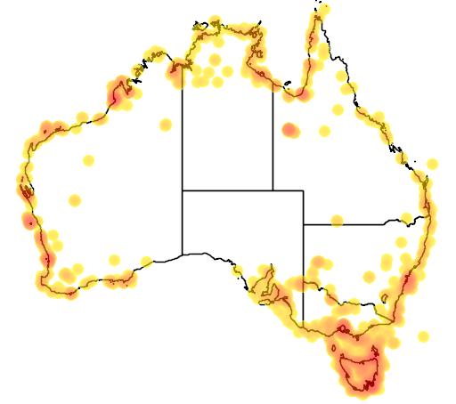 distribution map showing range of Larus novaehollandiae in Australia
