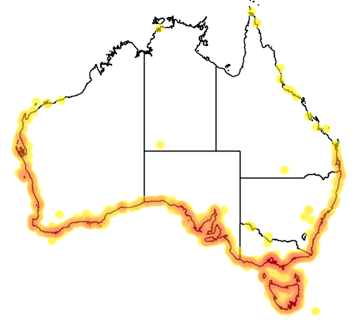 distribution map showing range of Larus pacificus in Australia