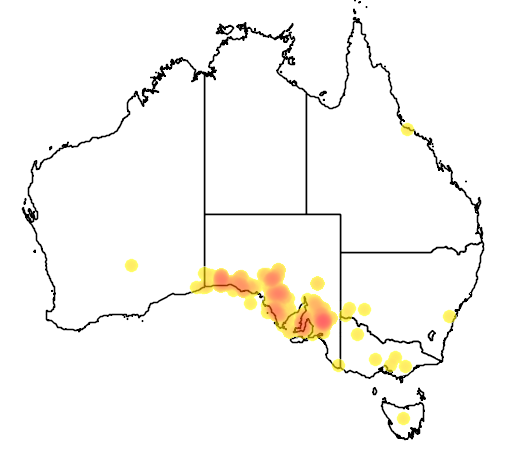 distribution map showing range of Lasiorhinus latifrons in Australia