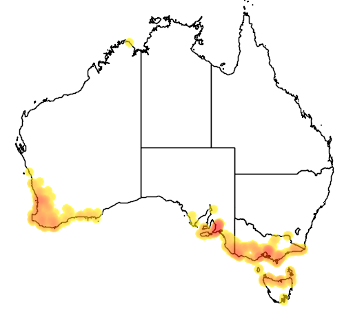 distribution map showing range of Leptoceras menziesii in Australia